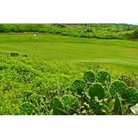 Yes, you'll even find cacti at Palmilla Beach Golf Club in Port Aransas, Texas.